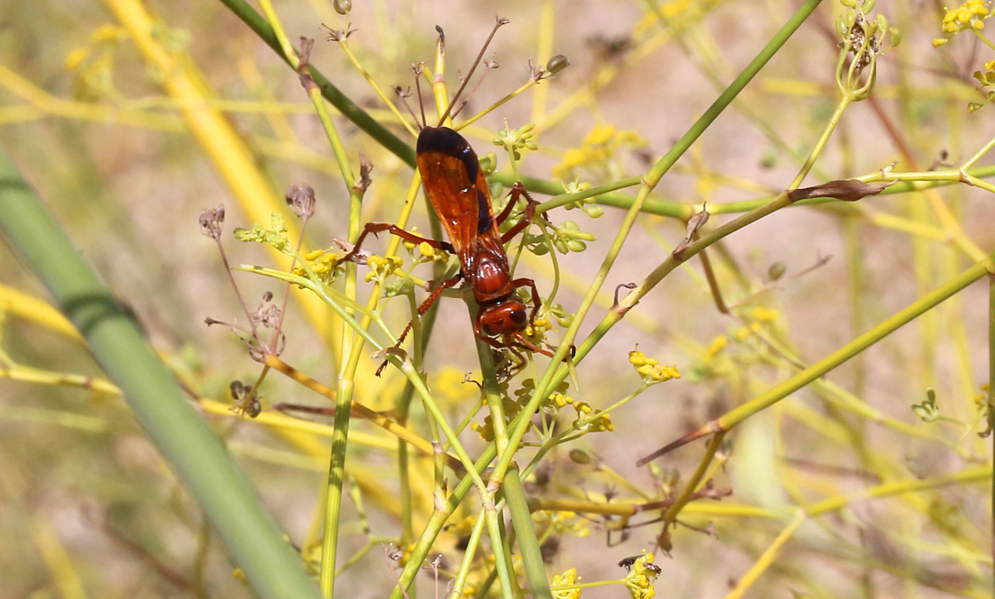 Wasps - 3 IMG_5659