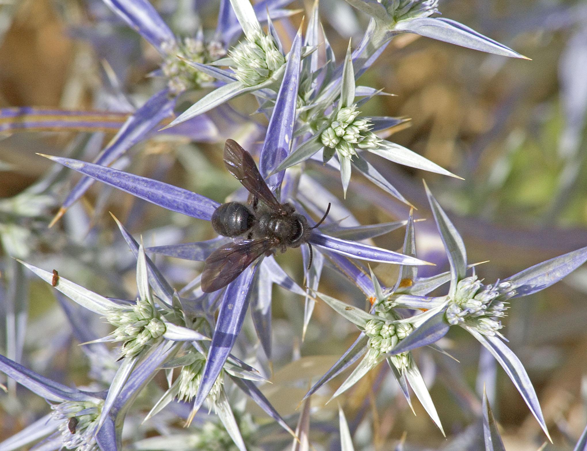 Wasps - 4