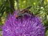 Wasps - 5b