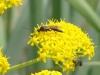 Wasps - 2 DSC06654
