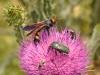 Wasps - 5e IMG_8700