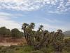 Beni Snassen Landscape - 5
