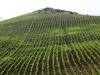Agricultural Landscapes - 9 140215AgLand