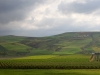 Agricultural Landscapes - 12 Landscape Road up Taza