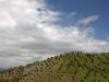 Agricultural Landscapes - 3