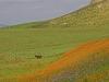 Agricultural Landscapes - 7