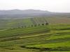 Agricultural Landscapes - 5