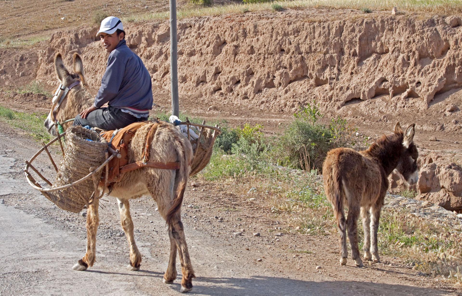Animals For Human Transport - 2