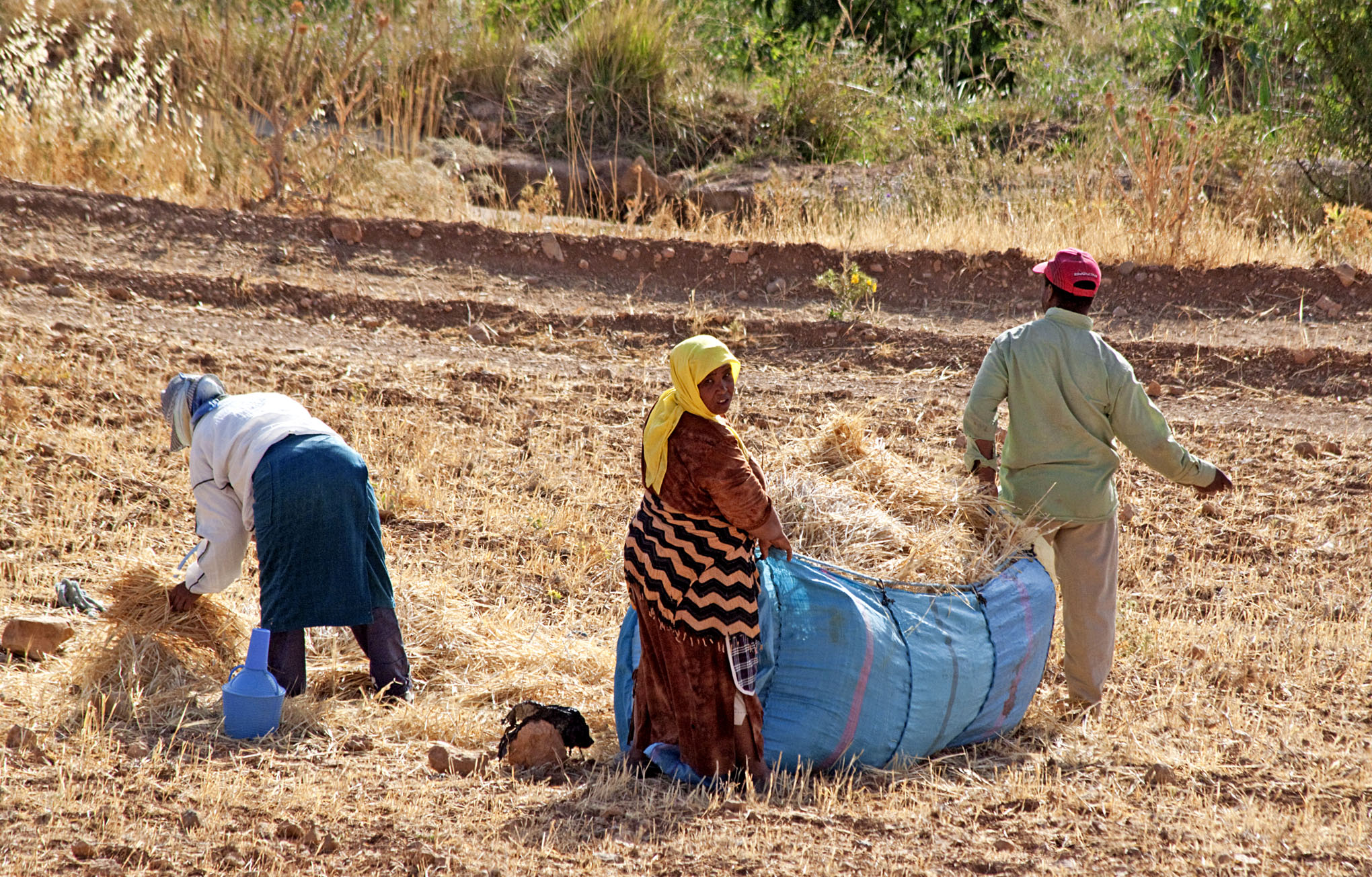 Harvesting: Produce - 2a