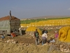 Harvesting: Produce - 4