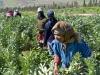 Harvesting: Produce - 1