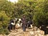 Shepherds & Herders - 5 150527_42