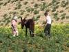 Planting & Cultivation - 6 DSC06612