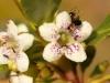 Beetle - 13 IMG_8272