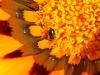 Beetle - 17 IMG_8275