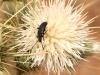 Beetle - 16 IMG_8478