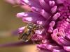 Beetle - 18 IMG_8546