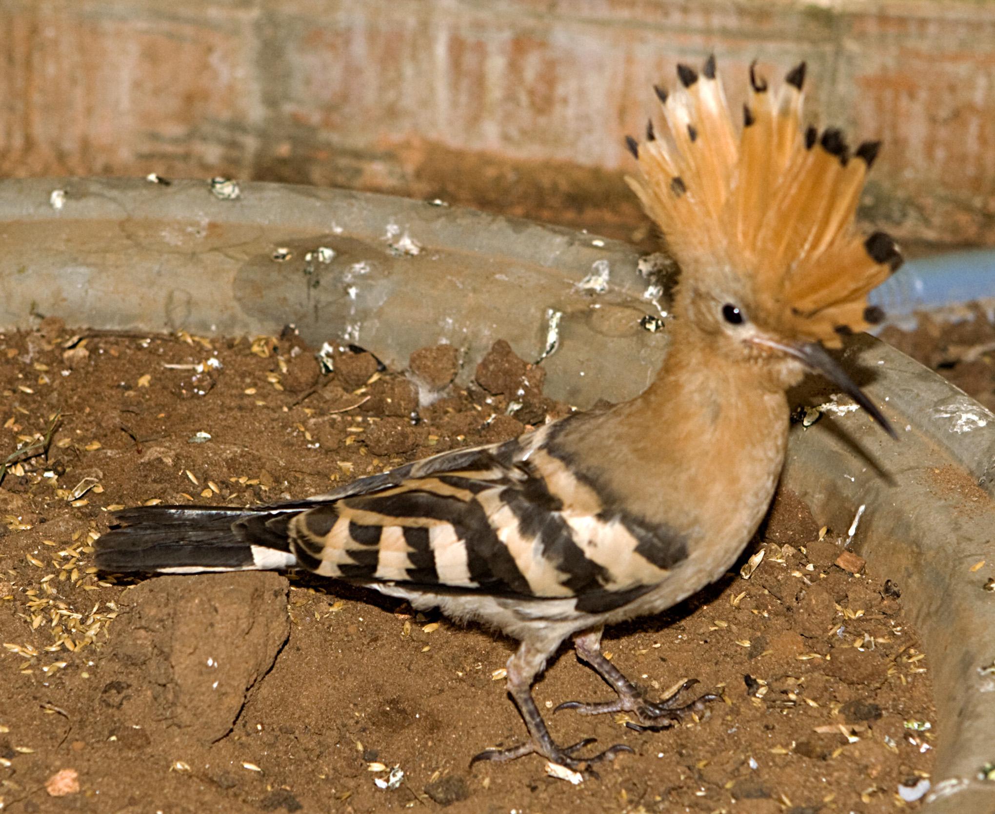 Bird - 32