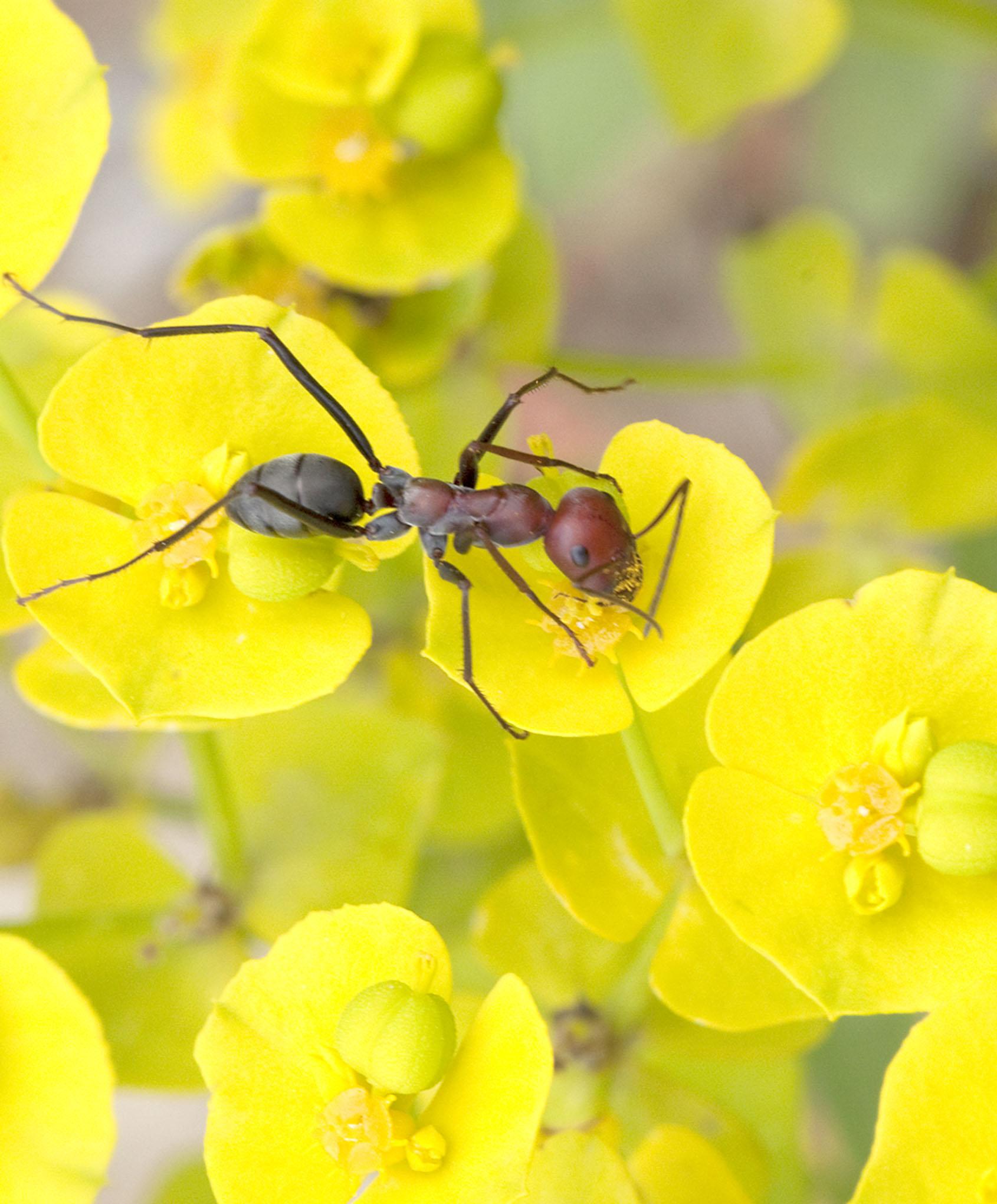 Ants - 1