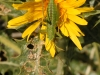 Insects: Order Hempitera - 5 IMG_8565