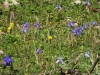 Bulb Plants of Morocco - 2c DSC06681