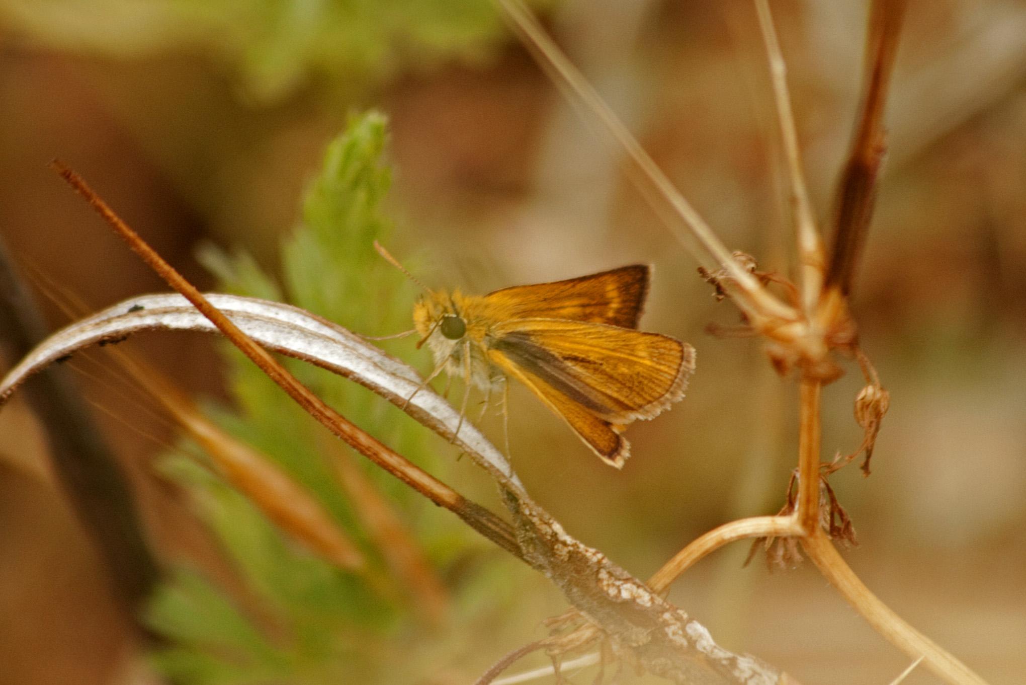 Butterflies - 22