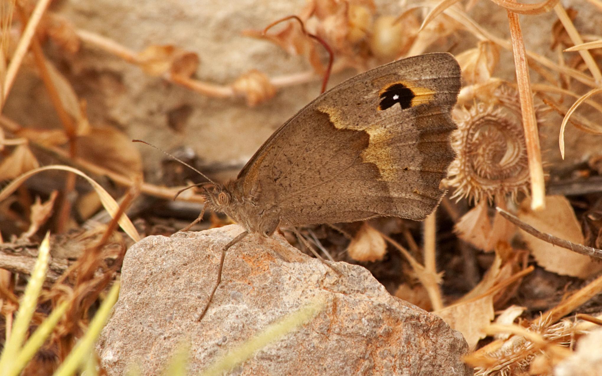 Butterflies - 21