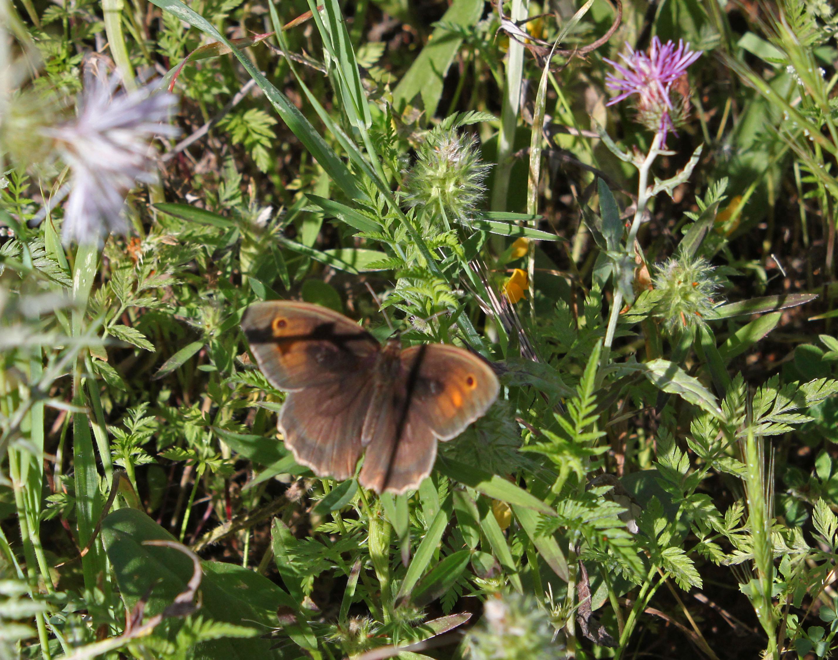 Butterflies - 20