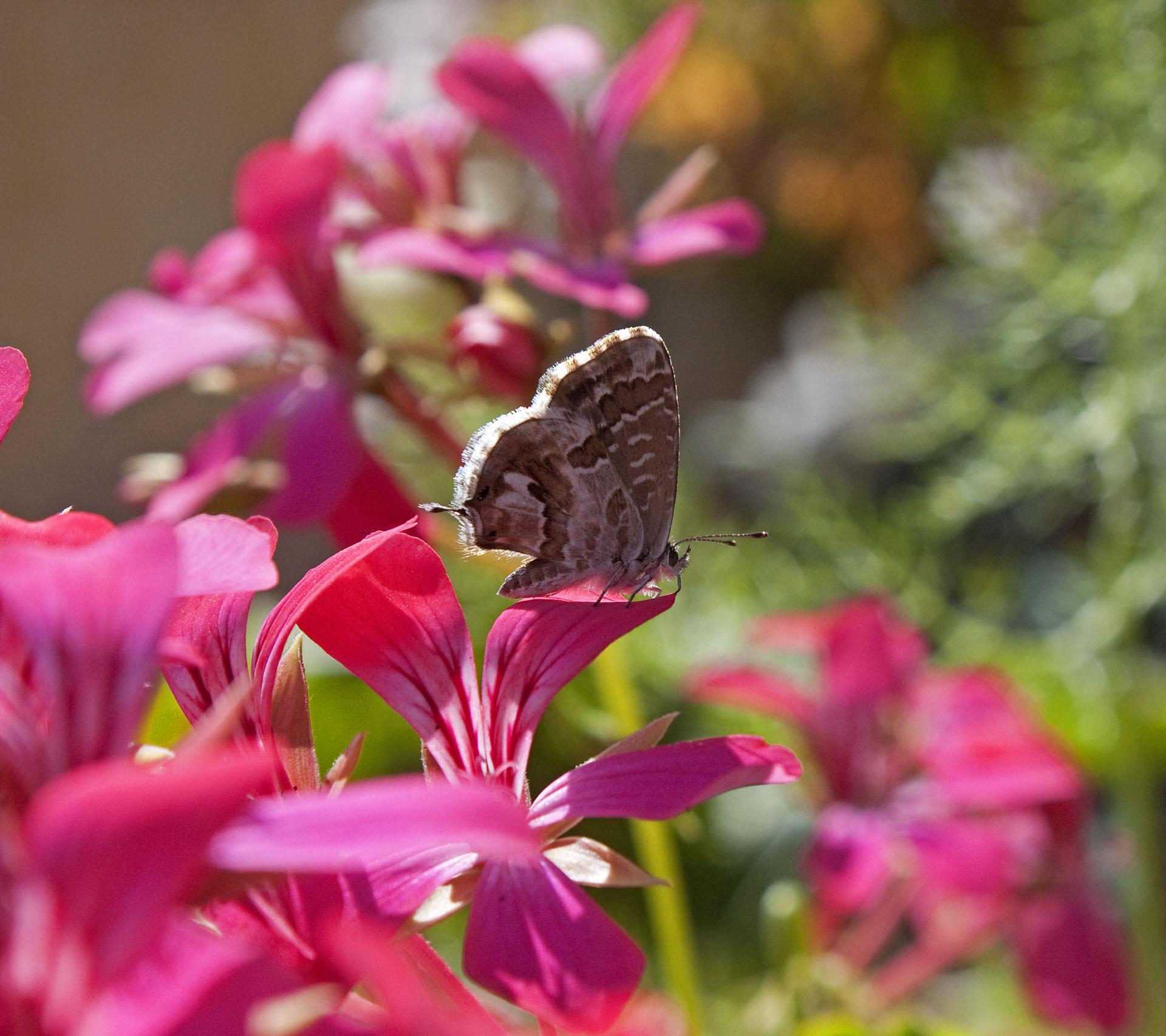 Butterflies - 15