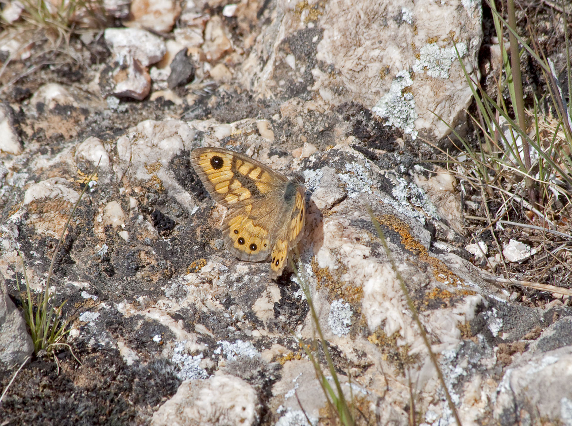 Butterflies - 2