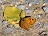 Butterflies - 11