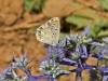 Butterflies - 10