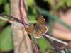 Butterflies - 9