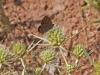 Butterflies - 5