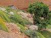Euphorbiaceae Family - 3a
