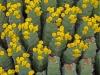 Euphorbiaceae Family - 3b