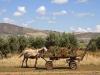 Donkeys - 2