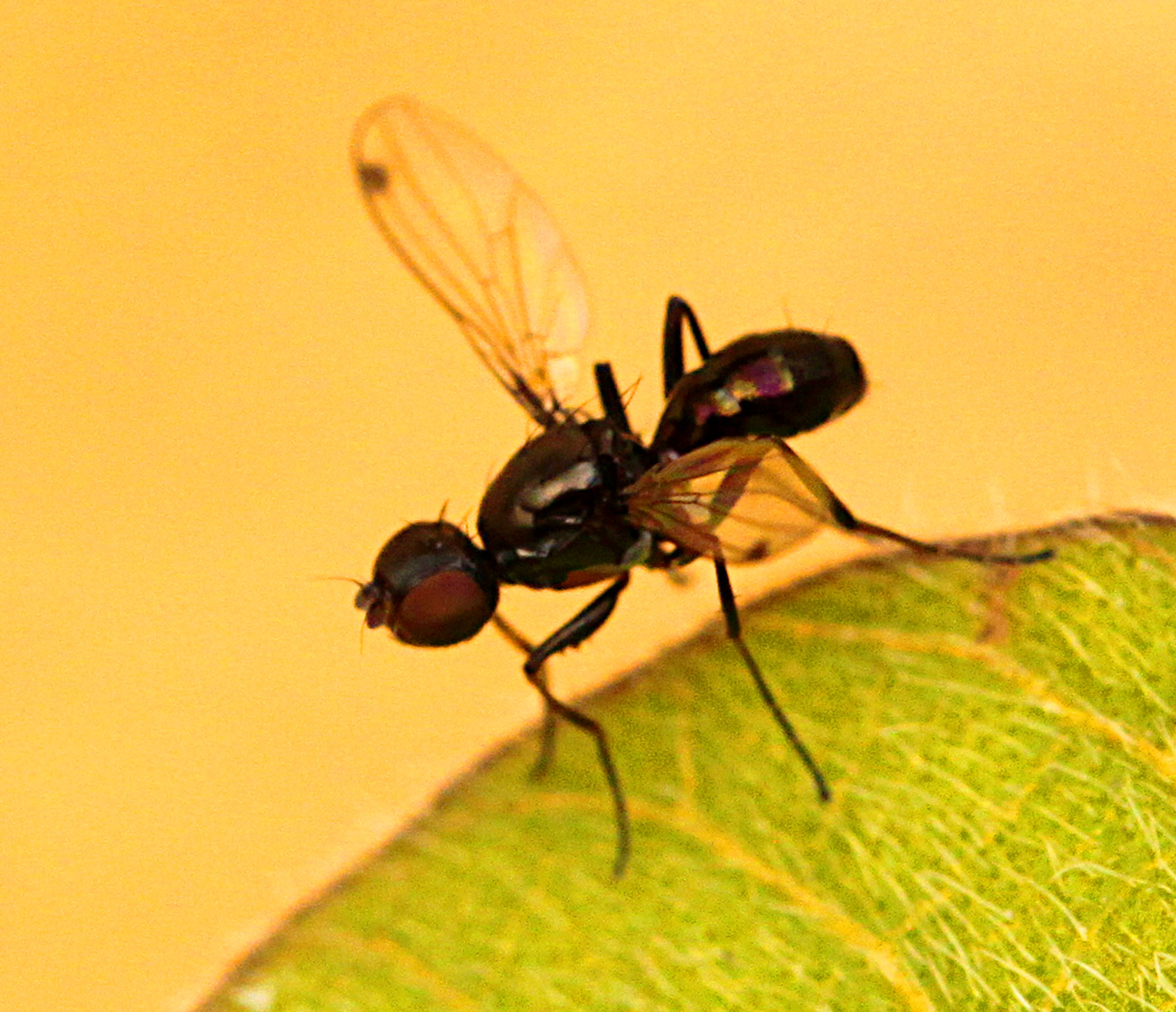 Fly - 13 IMG_8255