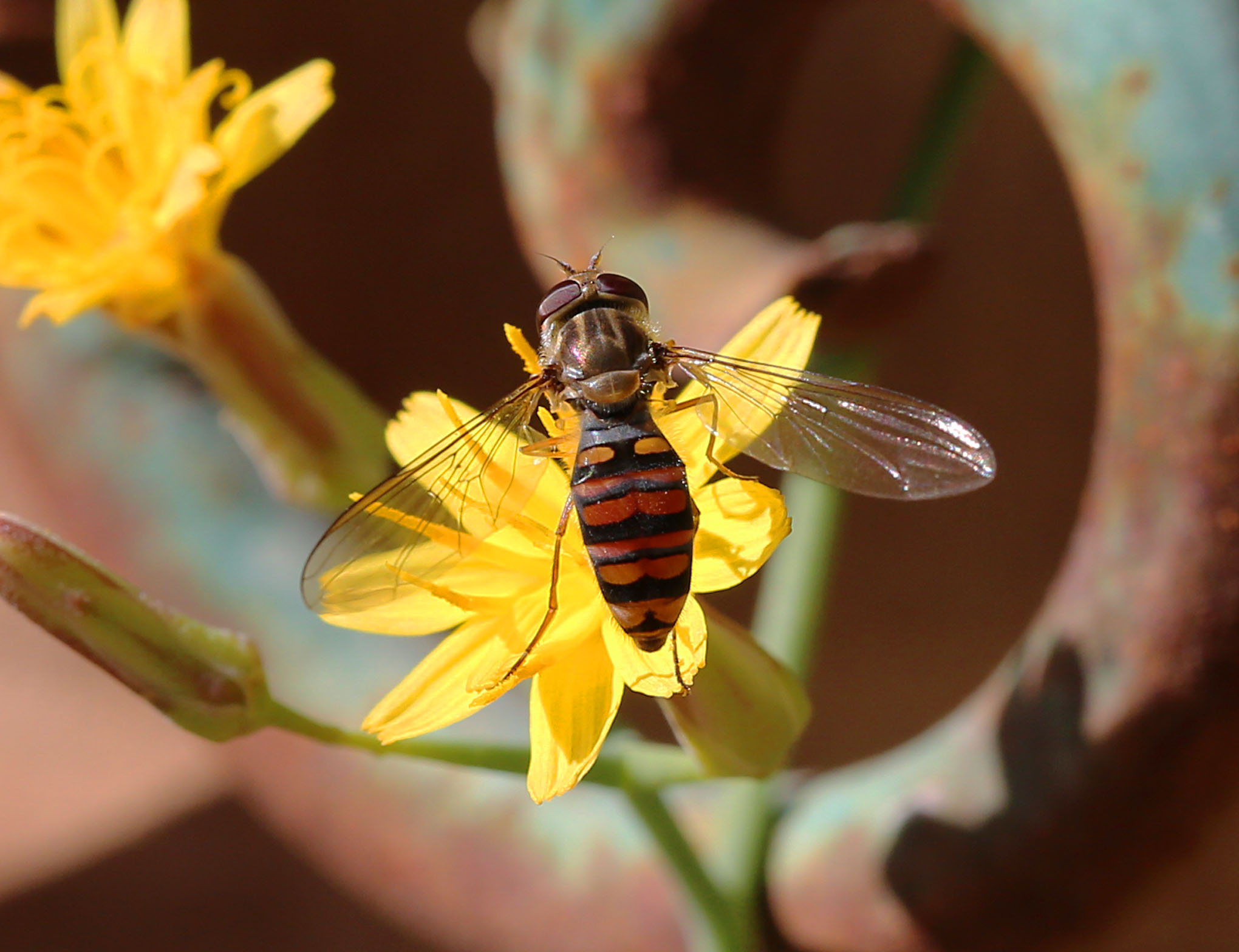 Fly - 22a IMG_8269-1