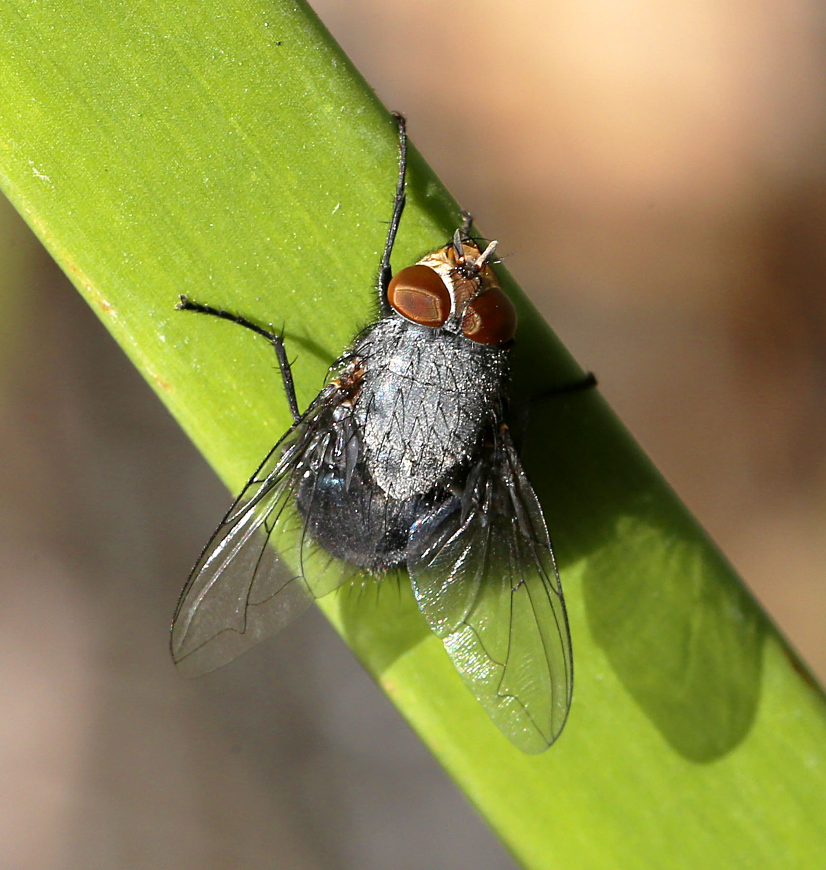 Fly - 21 IMG_8282-1