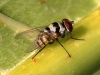 Fly - 18 IMG_8279-1