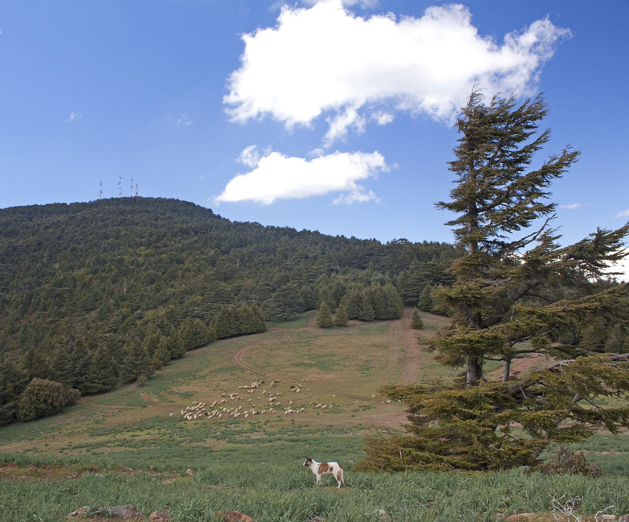 Mt. Tazzeka - 1