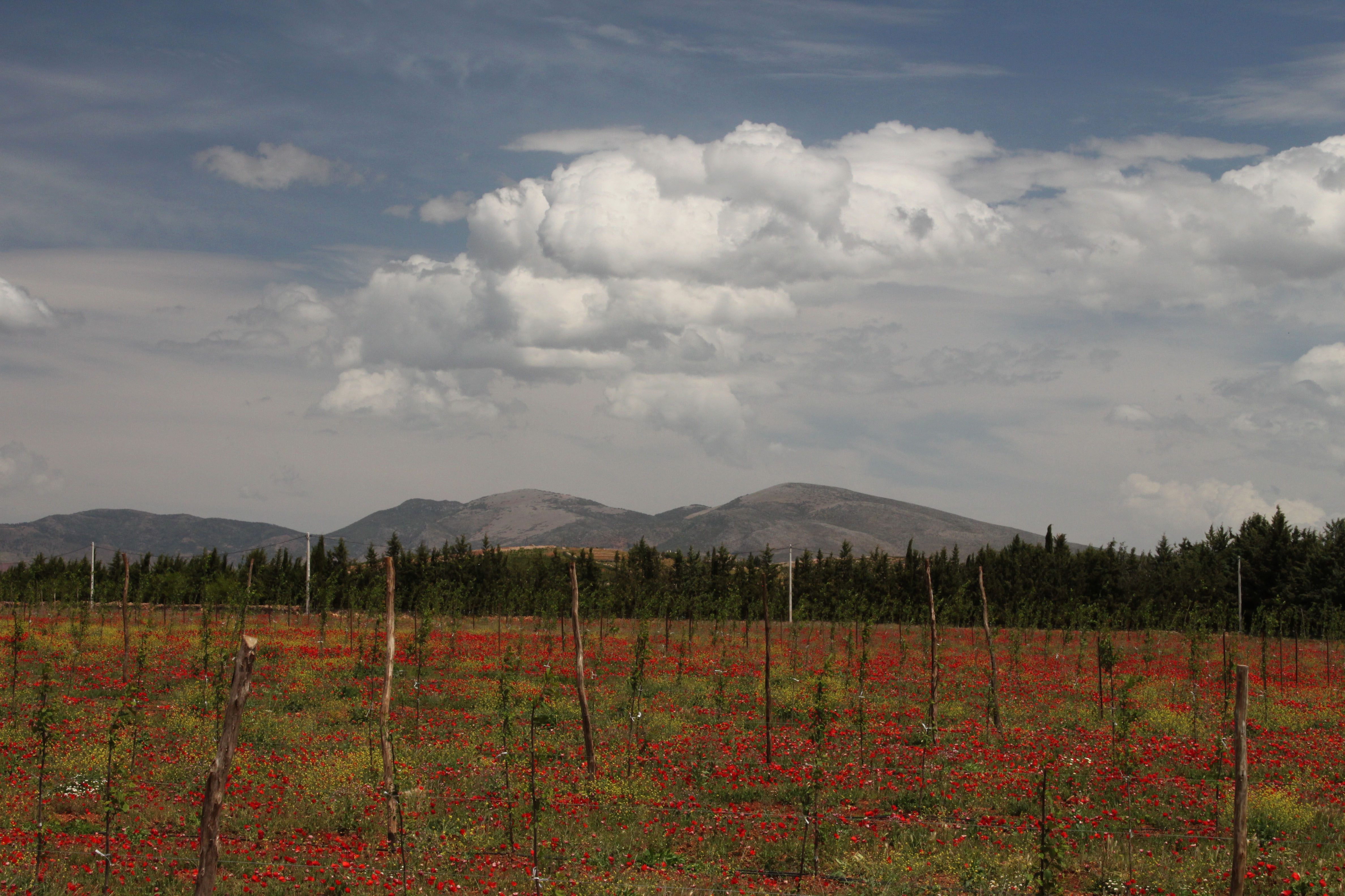 Landscapes of the Middle Atlas - 1