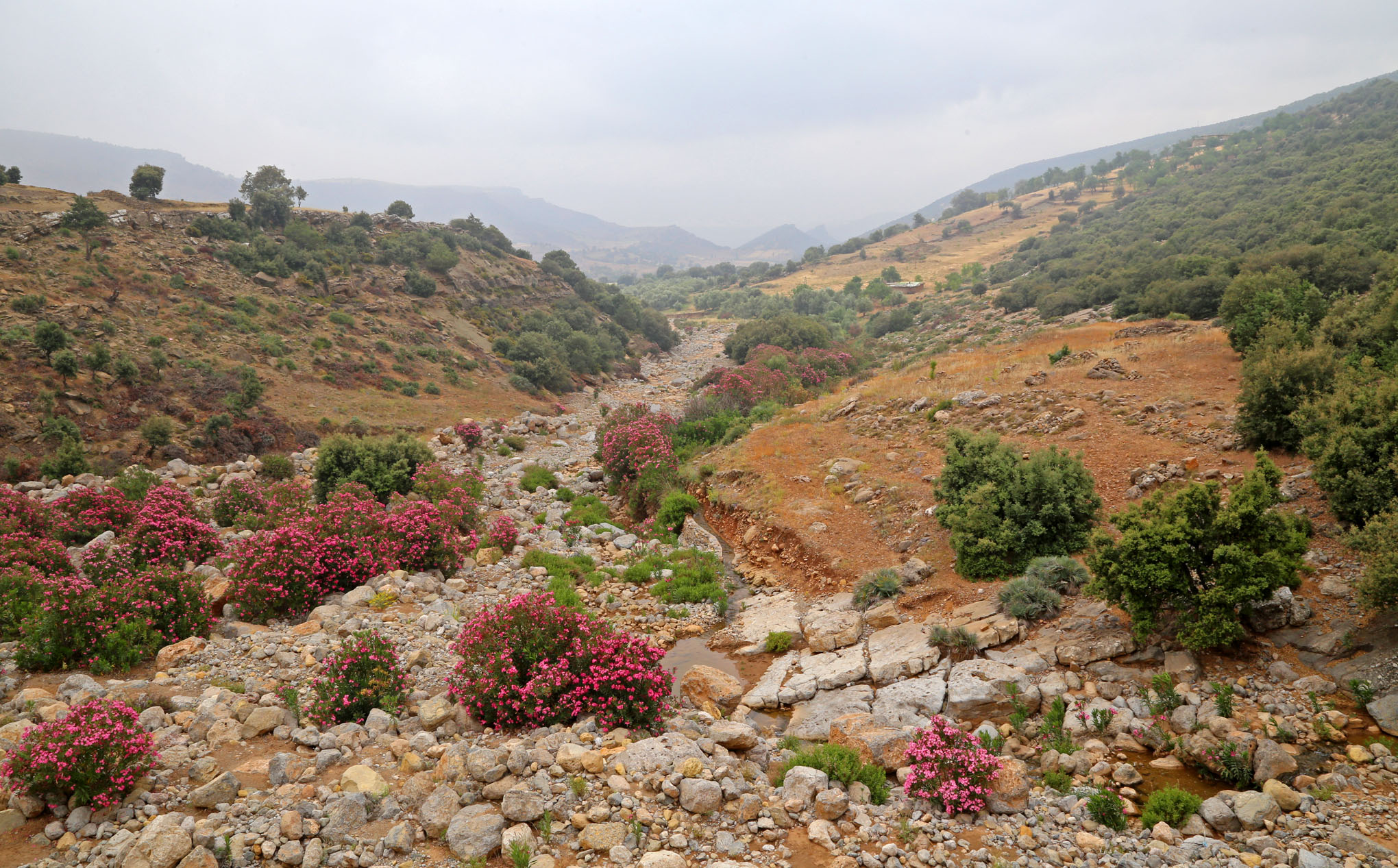 High Atlas Region West and South of Beni Mellal - 8