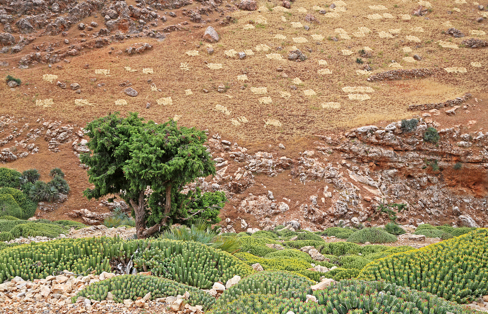 High Atlas Region West and South of Beni Mellal - 10