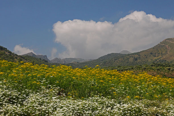 White and Yellow Wildflowers With Mountains Near Moulay Isdriss