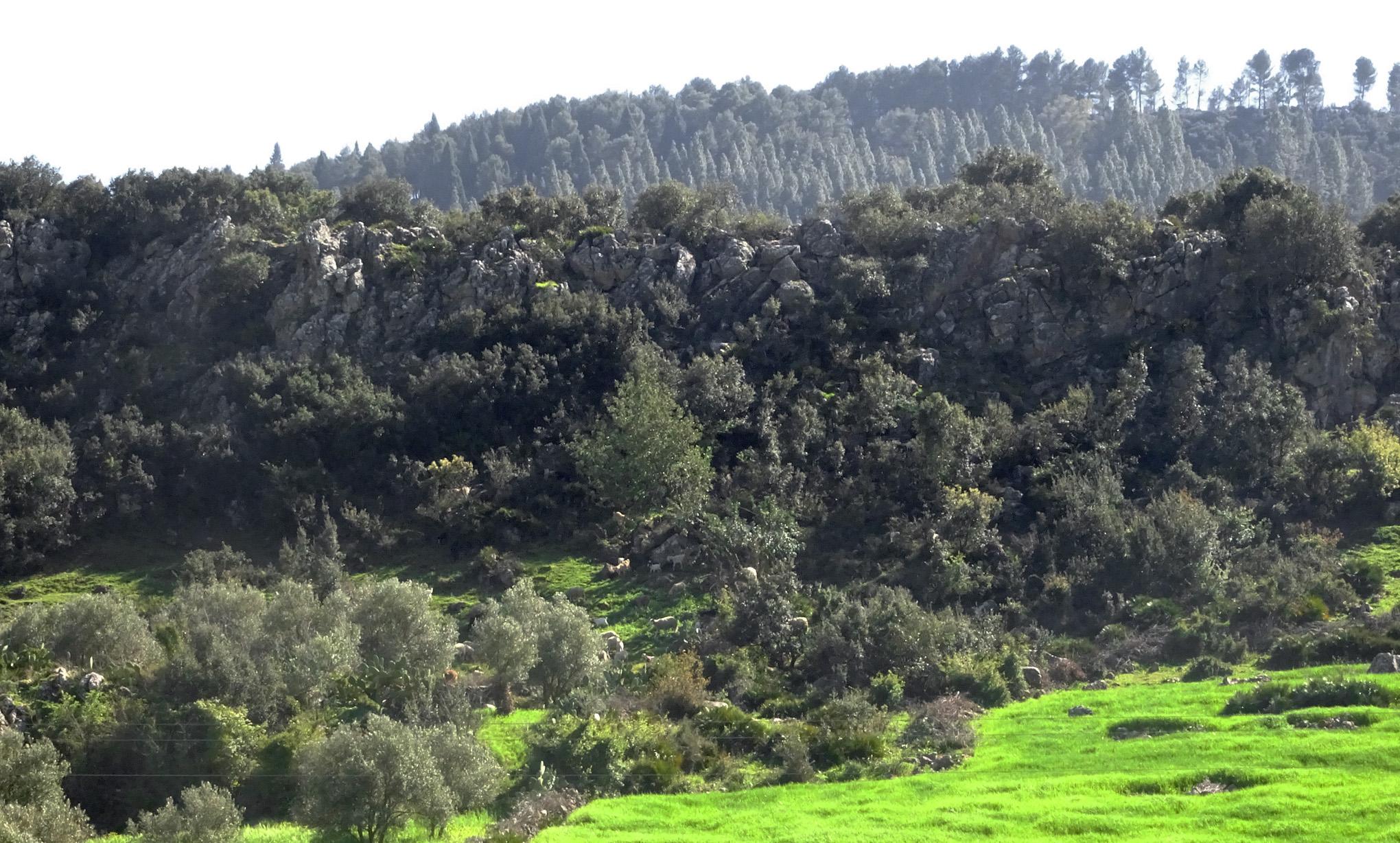 Mount Zerhoune - 5