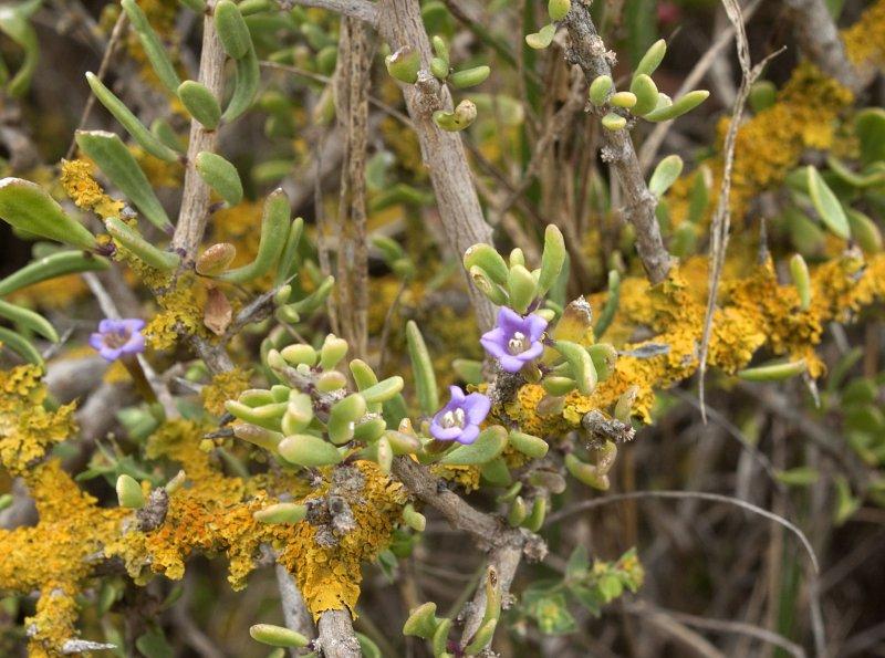 Coastal Flora 14