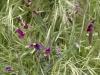Flora Rif 3