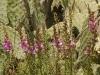 Flora Rif 7